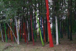 Pădurea colorată2