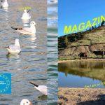 Federația noastră a publicat numărul 72 al revistei MAGAZIN CRITIC!